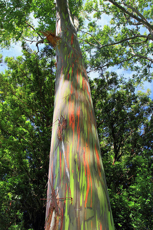 Rainbow Poster featuring the photograph Rainbow Tree by Pierre Leclerc Photography