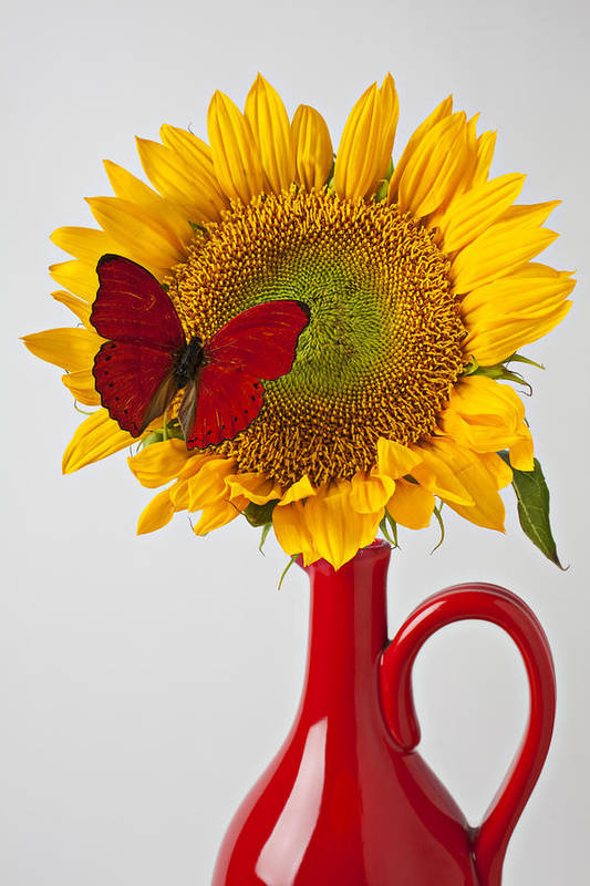 Red Butterfly Sunflower Red Pitcher Poster featuring the photograph Red Butterfly On Sunflower On Red Pitcher by Garry Gay