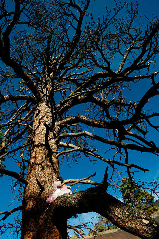 Woman In Pink Poster featuring the photograph Sitting In Tree 2 by Scott Sawyer