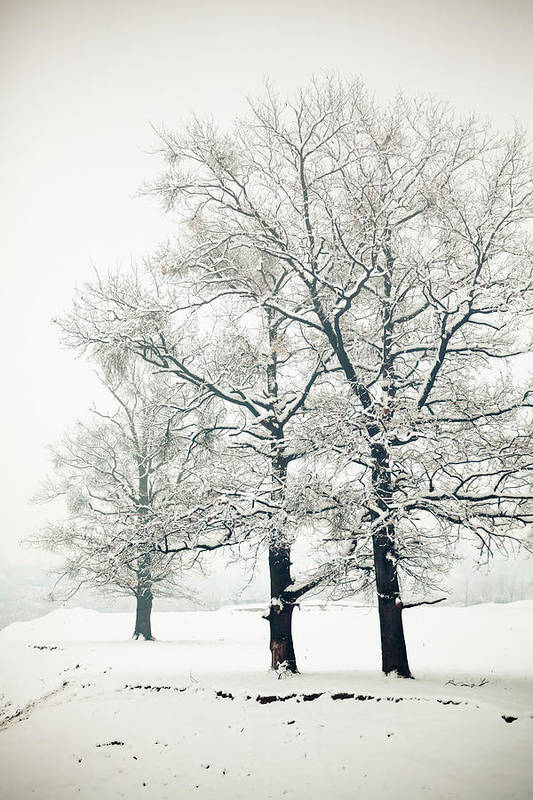 Winter Poster featuring the photograph Snowed by Gabriela Insuratelu