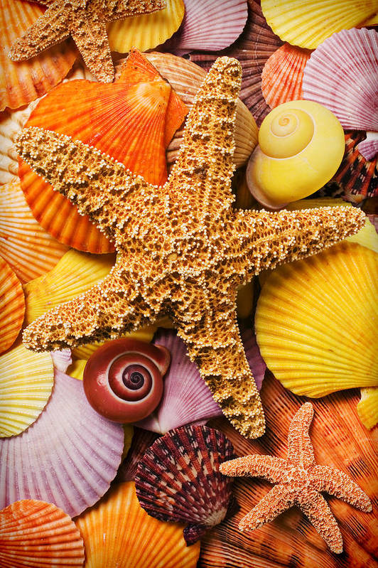 Starfish Poster featuring the photograph Starfish And Seashells by Garry Gay