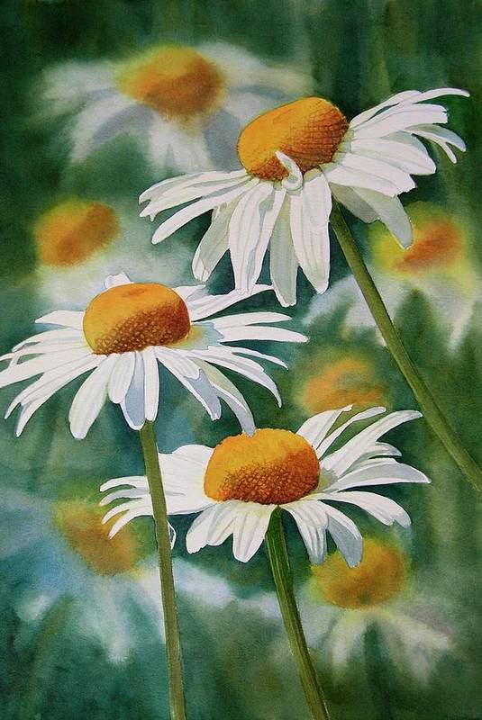 Watercolour Poster featuring the painting Three Wild Daisies by Sharon Freeman