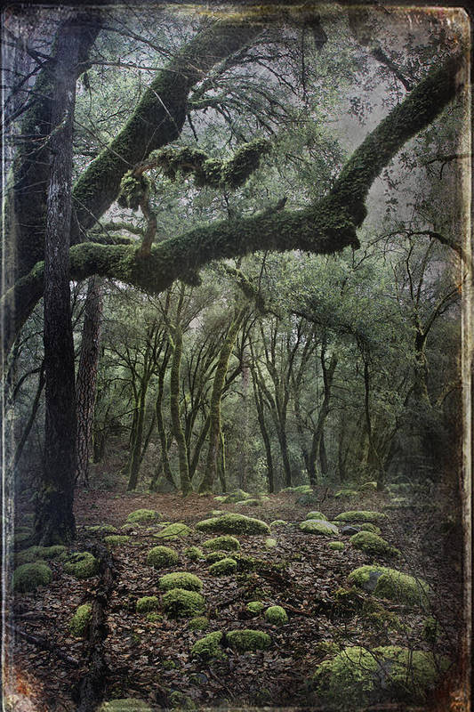 Landscape Poster featuring the photograph Where The Wild Hearts Roam by Laurie Search