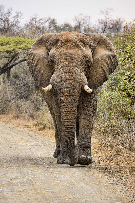 The Elephant Moves So Slowly by Stephen Stookey