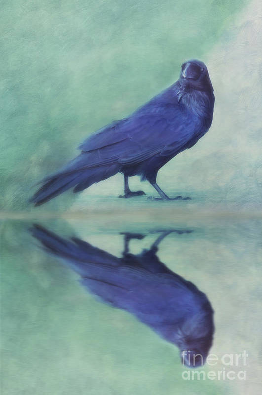 Raven Poster featuring the photograph Time To Reflect by Priska Wettstein