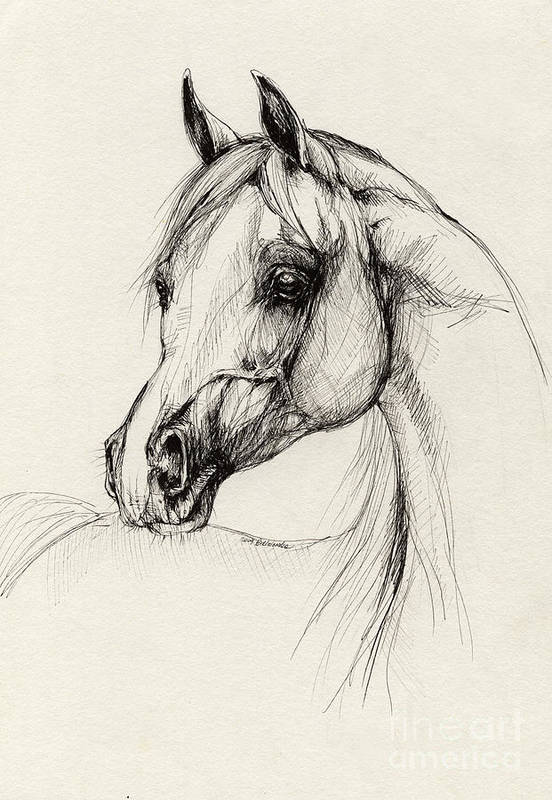 Horse Poster featuring the drawing Arabian Horse Drawing 27 by Angel Tarantella