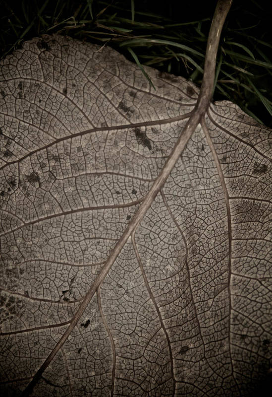 Leaf Poster featuring the photograph Ancient Skin by Odd Jeppesen