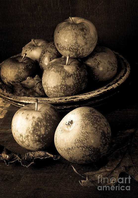 Fruit Poster featuring the photograph Apple Still Life Black And White by Edward Fielding