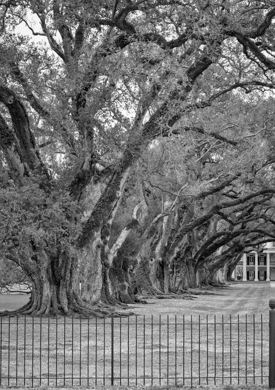 Oak Alley Plantation Poster featuring the photograph Sentinels Monochrome by Steve Harrington