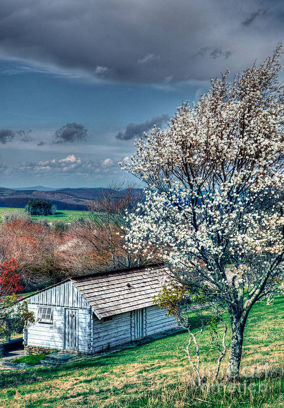 North Carolina Poster featuring the photograph Springtime In The Blue Ridge Mountains I by Dan Carmichael