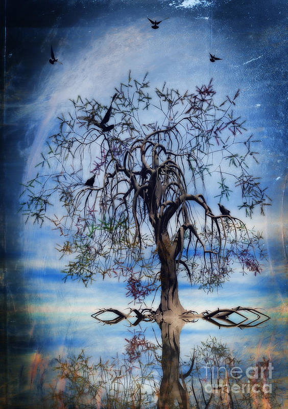 Wishing Tree Poster featuring the painting The Wishing Tree by John Edwards