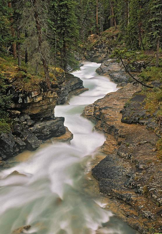 Light Poster featuring the photograph Beauty Creek, Banff National Park by Darwin Wiggett