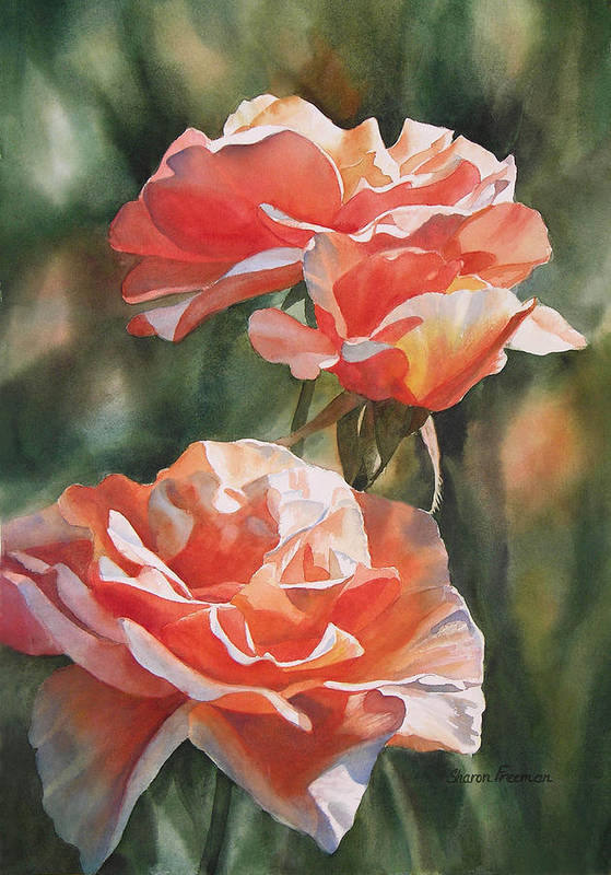Rose Poster featuring the painting Salmon Colored Roses by Sharon Freeman