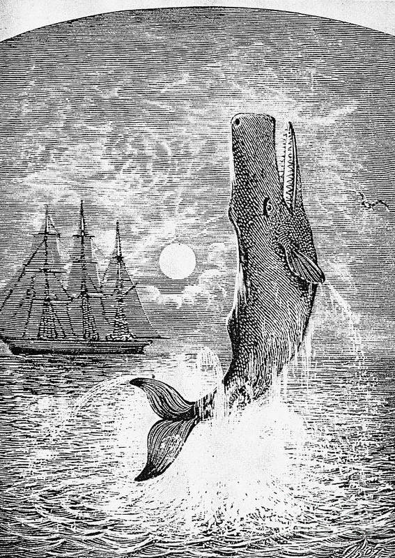 19th Century Poster featuring the photograph Melville: Moby Dick by Granger