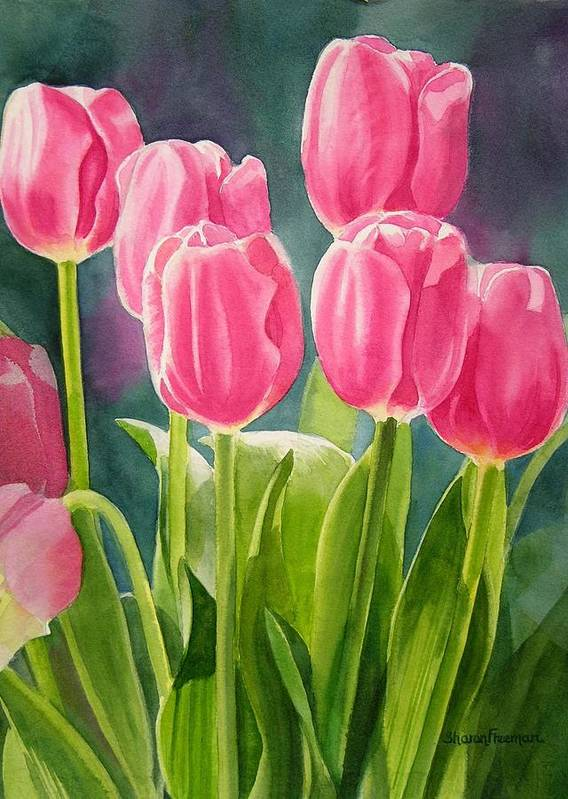 Pink Poster featuring the painting Rosy Pink Tulips by Sharon Freeman