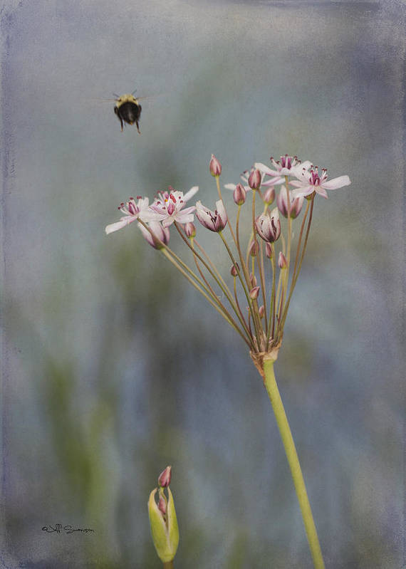 Flower Poster featuring the photograph Bee Gone by Jeff Swanson