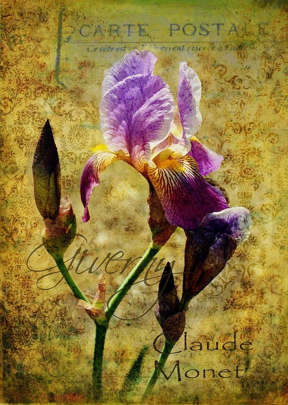 Iris Poster featuring the photograph Vintage Iris by Carla Parris
