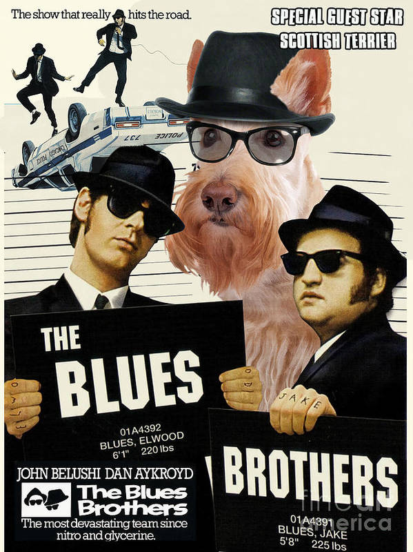 Scottish Terrier Poster featuring the painting Scottish Terrier Art Canvas Print - The Blues Brothers Movie Poster by Sandra Sij