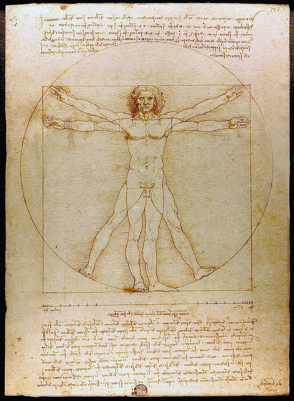 Vitruvian Man Poster featuring the drawing Vitruvian Man By Leonardo Da Vinci by Karon Melillo DeVega