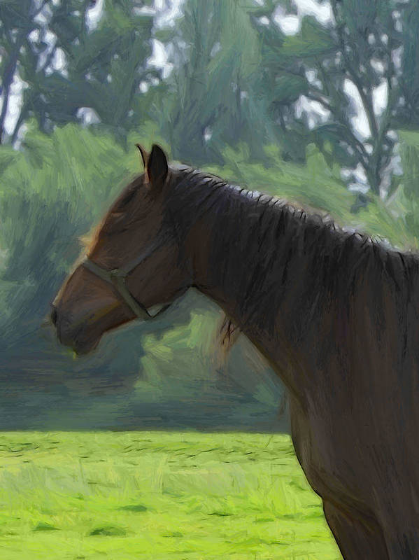 Stallion Horse Animal Handsome Stately Imposing Impressive Magnificent Majestic Poster featuring the painting The Stallion by Steve K