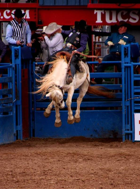 Rodeo. Rodeos Poster featuring the photograph Airborne by Joe Kozlowski
