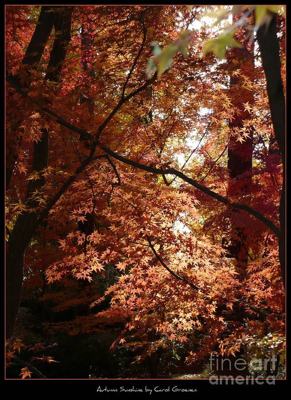 Spokane Poster featuring the photograph Autumn Sunshine Poster by Carol Groenen