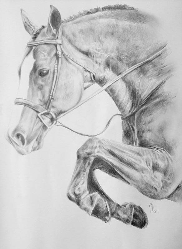 Jumping Horse Drawing Pencil Poster featuring the drawing Horse Pencil Drawing by Arion Khedhiry