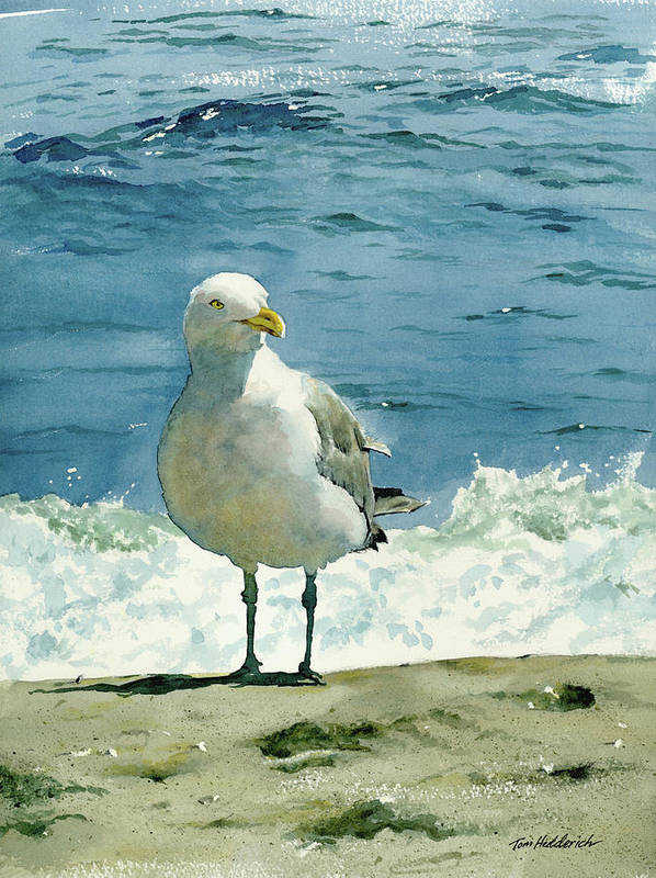 Seashore Print Poster featuring the painting Montauk Gull by Tom Hedderich