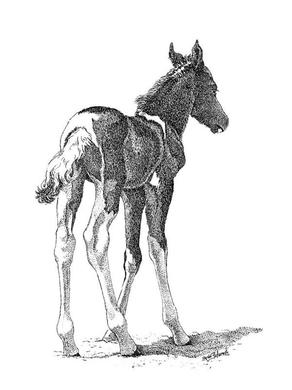 Foal Poster featuring the drawing Innocence by Renee Forth-Fukumoto