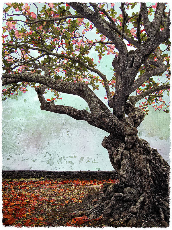 Trees Poster featuring the photograph Knotted Tree by Daniel Hagerman