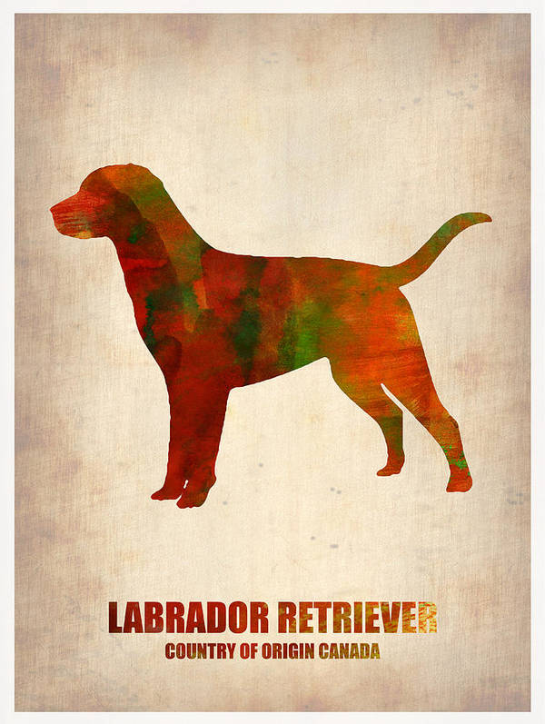 Labrador Retriever Poster featuring the painting Labrador Retriever Poster by Naxart Studio