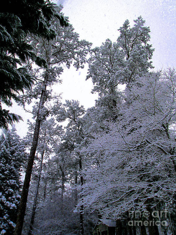 Winter Poster featuring the photograph Winter Surprise by Silvie Kendall