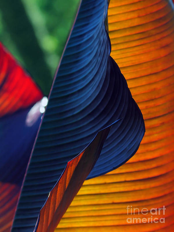 Nature Poster featuring the photograph Canna Lily by Vadym Graifer