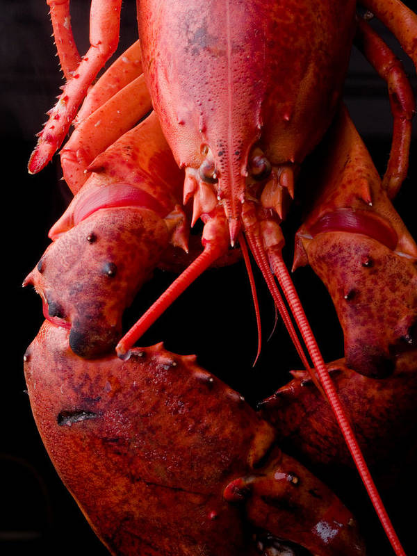 Italy Poster featuring the photograph Lobster by Jim DeLillo