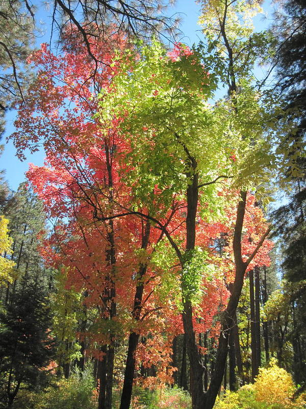 Fall Poster featuring the photograph Yummy Fall Colors by Sandy Tracey