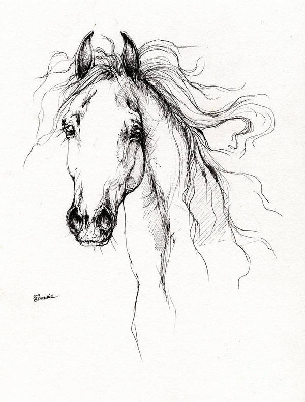 Horse Poster featuring the drawing Arabian Horse Drawing 4 by Angel Tarantella
