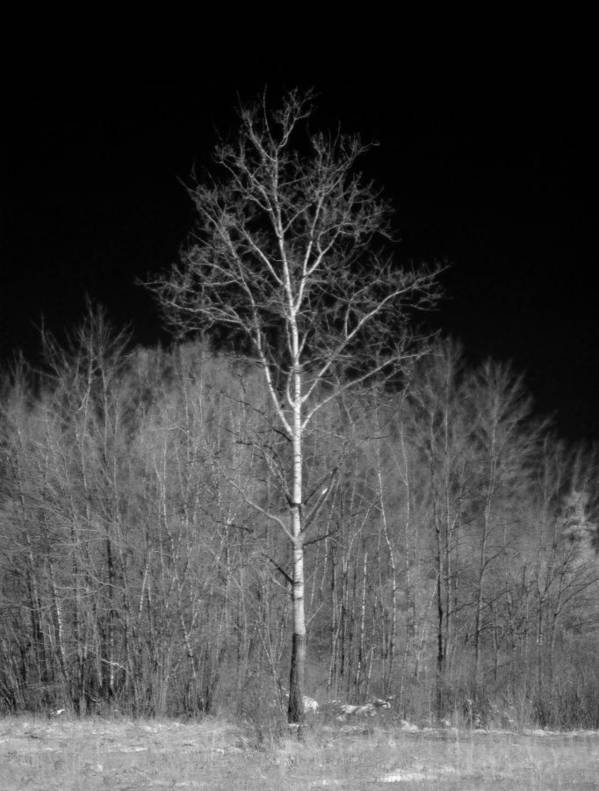 Tree Poster featuring the photograph Dreamscape by Luke Moore