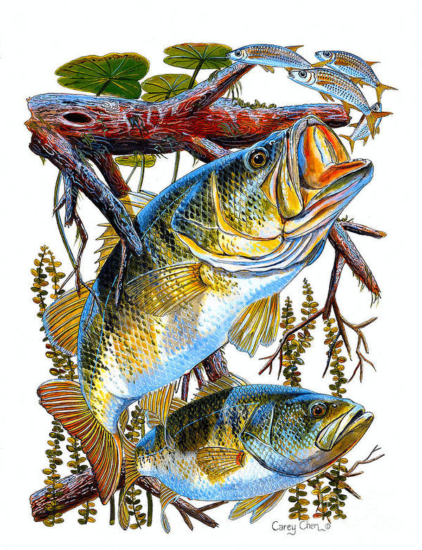 Bass Poster featuring the painting Lurking Bass by Carey Chen