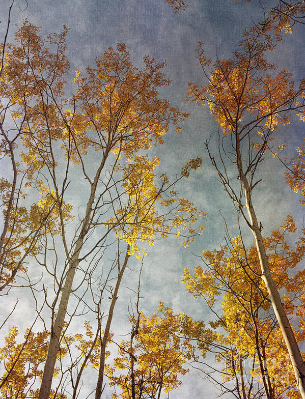 Leaves Poster featuring the photograph Sunny Leaves Tall by Priska Wettstein