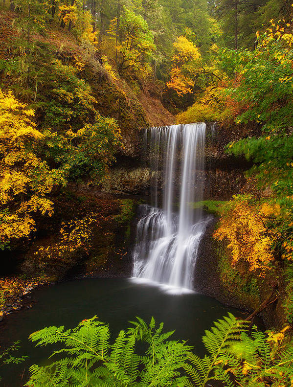 Waterfall Poster featuring the photograph Surrounded By Fall by Darren White