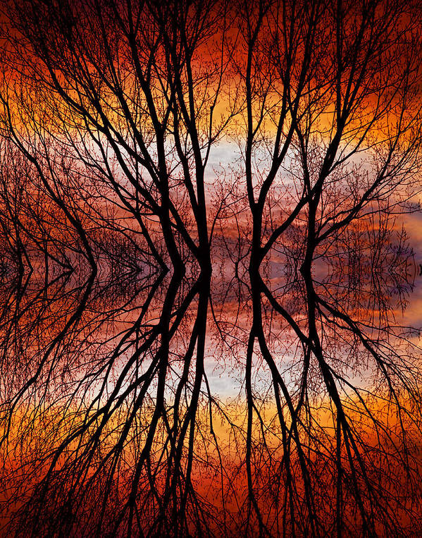 Abstracts Poster featuring the photograph Sunset Tree Silhouette Abstract 2 by James BO Insogna