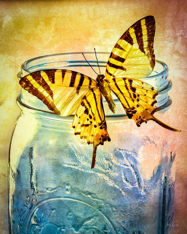 Blue Glass Poster featuring the photograph Butterfly Blue Glass Jar by Bob Orsillo