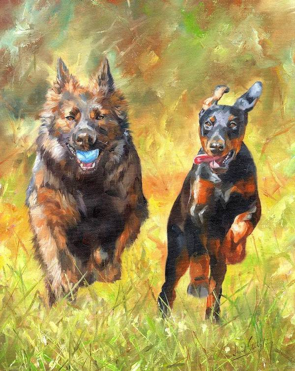 Dogs Poster featuring the painting Pure Joy by David Stribbling