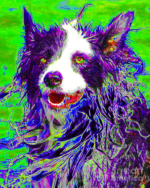 Animal Poster featuring the photograph Sheep Dog 20130125v4 by Wingsdomain Art and Photography