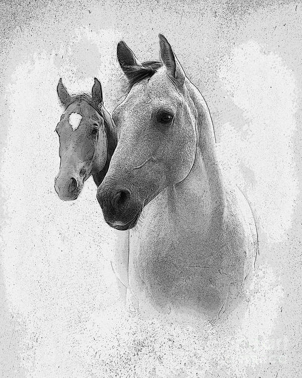 Horse Poster featuring the photograph Curiosity by Betty LaRue
