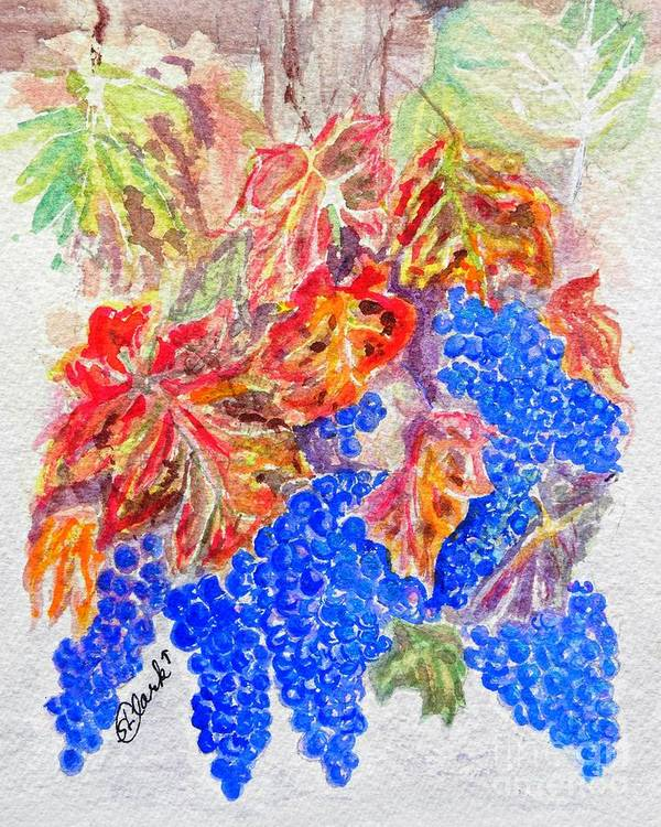 Grapes On The Vine. Ripe Grapes Poster featuring the painting Havest Time by Susan Lee Clark