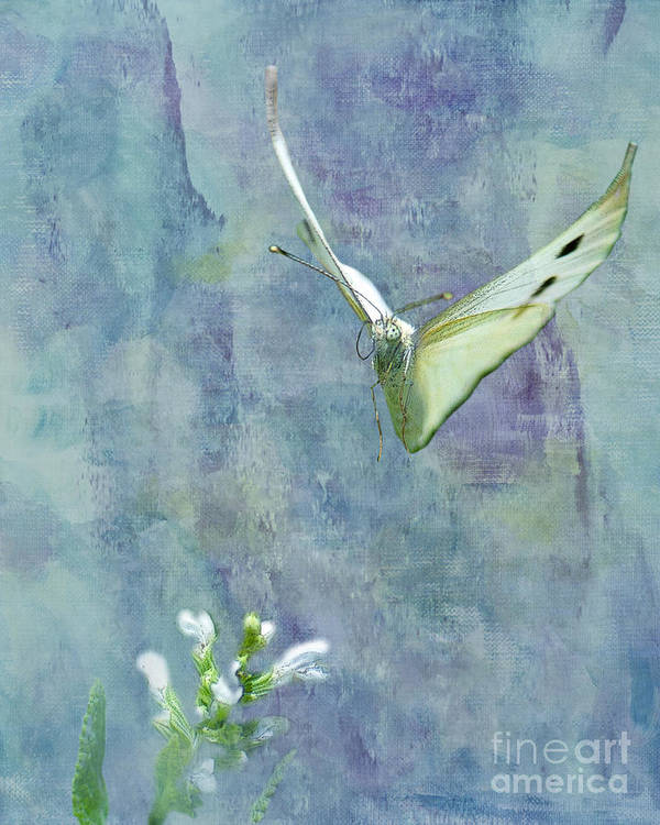 Cabbage White Butterfly Poster featuring the photograph Winging It by Betty LaRue