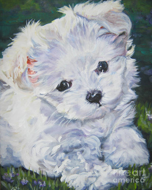 Maltese Poster featuring the painting Maltese by Lee Ann Shepard