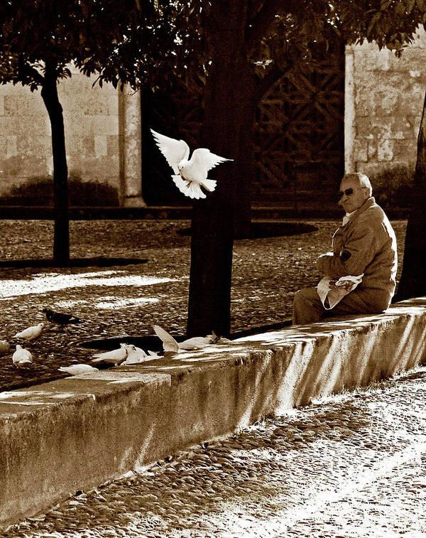 Dove Poster featuring the photograph Cordoba Flight by Lorraine Devon Wilke