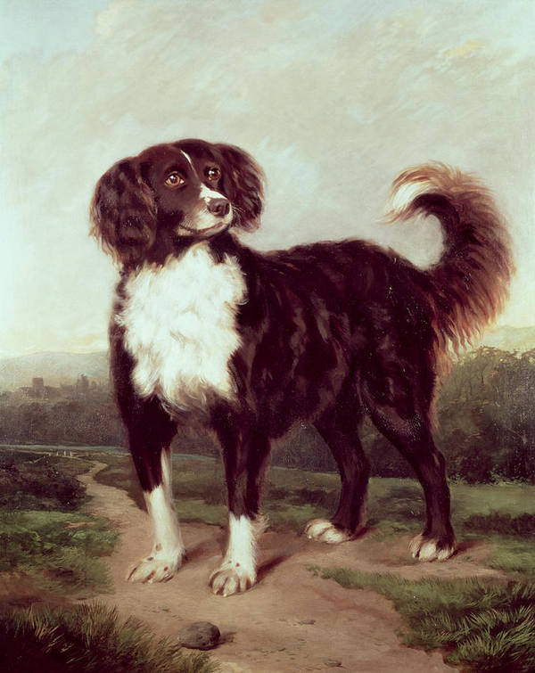 Spaniel By J.w. Morris (fl.1866-67) Poster featuring the painting Spaniel by JW Morris